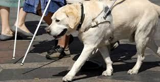 Körler İçin Rehper Köpek Görüntüsü